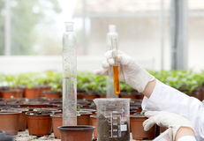 Biologist with test tube in greenhouse Stock Images