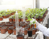 Biologist with test tube in greenhouse Stock Photo