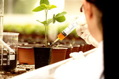 Biologist testing growth of sprout Stock Photography