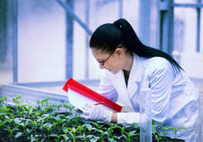 Biologist testing growth of sprout Royalty Free Stock Images