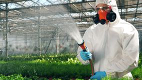 Biologist in uniform waters growing plants in a glasshouse. Genetic modification food concept.