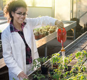 Biologist watering seedlings in greenhouse Royalty Free Stock Image