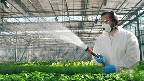 A biologist waters plants in pots. Scientist spraying toxic pesticides, insecticides on crop.