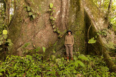Biologist Woman Nest To A Kapok Tree Stock Images