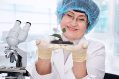 Biologist at work Royalty Free Stock Image