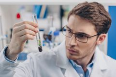 Biologist working with plant in flask. Male biologist working with plant in flask in laboratory Stock Image