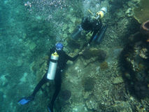 Biologiste marin vérifiant le récif coralien Photos stock