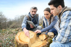 Biologists analysing tree trunk Royalty Free Stock Photo