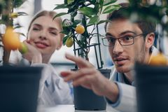 Biologists with lemon plants. Happy biologists with lemon plants in laboratory Stock Image