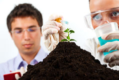 Biologists  making an experiment in labor Stock Photo