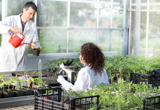 Biologists with seedlings in greenhouse Stock Photography