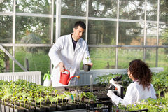 Biologists with seedlings in greenhouse Royalty Free Stock Photography