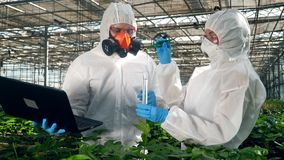 Biologists test a plant in a greenhouse, putting it into a testing tube. 4K stock footage