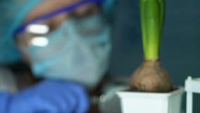 Biologo che esamina pianta da vaso con la lente d'ingrandimento, ecologia di effetto dei fertilizzanti stock footage
