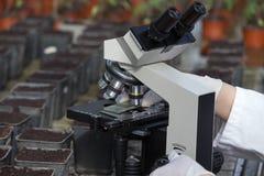 Biologo che prepara il campione del suolo per il microscopio Fotografia Stock Libera da Diritti