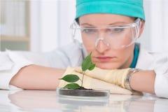 Biologo della donna al laboratorio Fotografia Stock