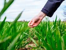 Biologo della donna di agricoltura che ispeziona il raccolto Fotografia Stock