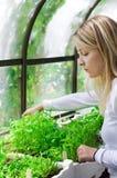 biologväxthusworking royaltyfri bild