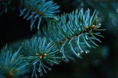 Biology, Blur, Branches Stock Photos