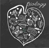 Biology Doodles vector Royalty Free Stock Photos