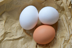 Biology eggs Royalty Free Stock Images