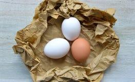 Biology eggs Royalty Free Stock Photo
