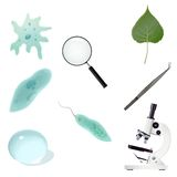 Biology icon Stock Images
