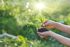 Free Biology Laboratory Nature And Science, Plants With Biochemistry Structure On Green Background Stock Photography - 162019712