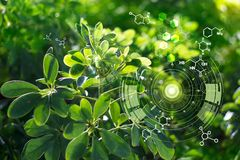 Free Biology Laboratory Nature And Science, Plants With Biochemistry Structure On Green Background Stock Photos - 162019753