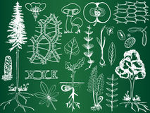 Biology plant sketches on school board Royalty Free Stock Photography