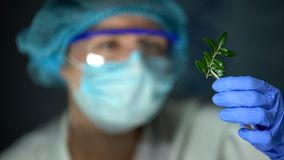 Biology researcher analyzing green plant sample human-caused influence on nature. Stock photo royalty free stock images