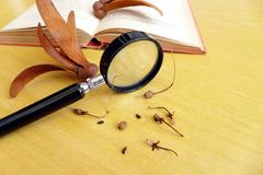 Biology scientist studying plant specimen. A photograph showing a magnifying glass placed on a table with some exotic plant specimens of tropical plants fruit royalty free stock photos