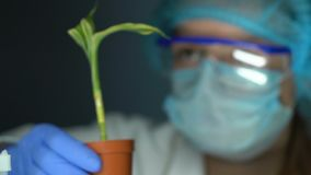 Bioloog die installatie in pot nemen die resultaat na de ecologie van de meststoffeninjectie controleren stock video