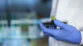 Bioloog die nieuwe soort gewassen houden, die tablet voor opnameonderzoeksresultaten gebruiken stock footage