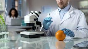 Bioloog die spuit voor het inspuiten van sinaasappel, voedselexperiment, pesticiden voorbereiden royalty-vrije stock afbeeldingen