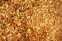 Biomasa de madera imagen de archivo libre de regalías