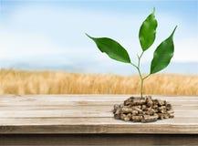 biomass imagens de stock