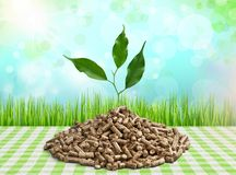 Biomass. Pellets wood plant photography fuel closeup royalty free stock image