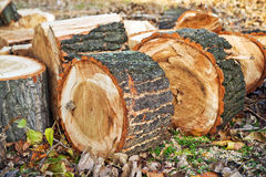 Biomass firewood Royalty Free Stock Photos