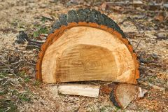 Biomass firewood Royalty Free Stock Image