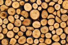 Biomass firewood Stock Photography