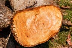 Biomass firewood Royalty Free Stock Photo