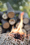 Biomass in flames Royalty Free Stock Image