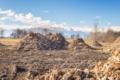 Biomass from lumber industry discards Royalty Free Stock Photos