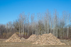 Biomass from lumber industry discards Royalty Free Stock Photography