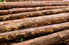 Biomass material stock images