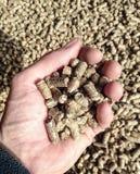 Biomass pellets. A handful of biomass pellets stock image