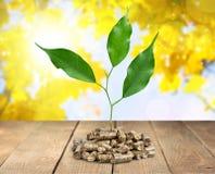 Biomass. Pellets wood plant fuel closeup heap royalty free stock images