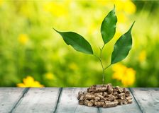 Biomass. Pellets wood plant photography fuel closeup royalty free stock photo