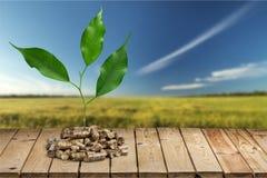 Biomass. Pellets wood plant photography fuel closeup stock images
